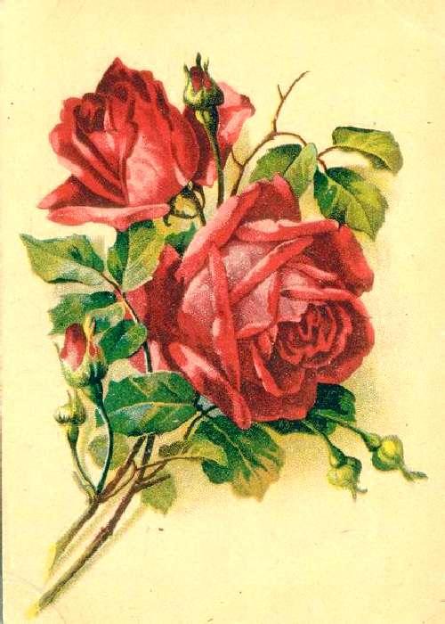 картинки на открытку цветы