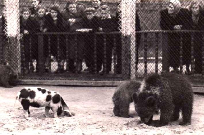 Московский зоопарк, 1920 год